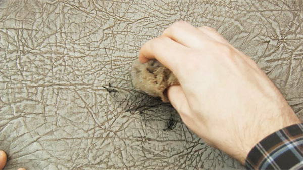 cómo quitar manchas de boli en cuero